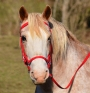 Meet Our Breeds: Pony of the Americas